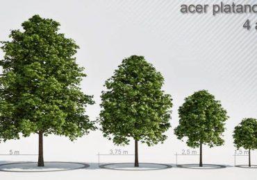 Free 3D Models Trees | Krzysztof Czerwinski