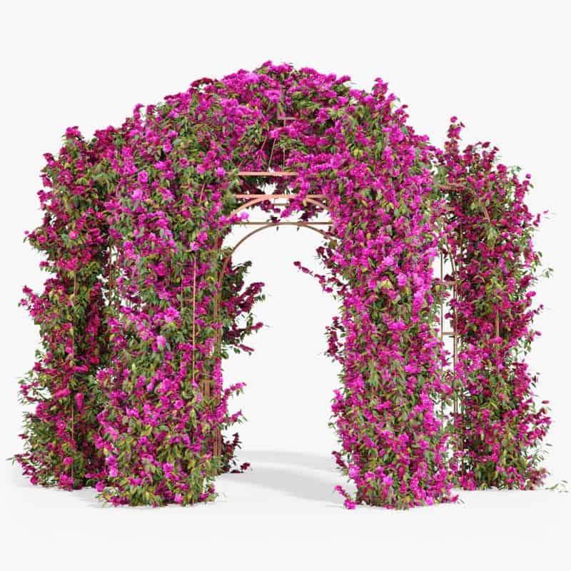 How to create a realistic Bougainvillea with Ivy plugin