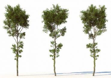 Free trees 3D Models