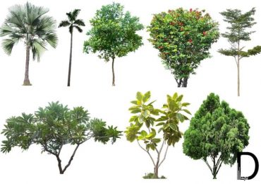 20 Tree PNG Images (Free Cutouts) for Architecture, Landscape, Interior Renderings | Dzzyn