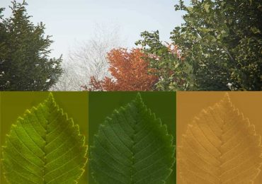 Tree model & seasonal leaves | XOIO