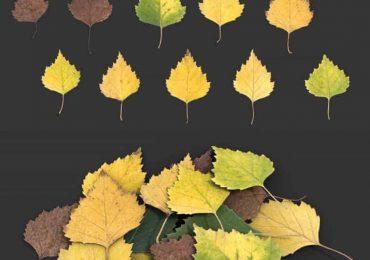 Leaf Birch II   Nordic Fx