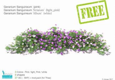 Free 3D Model Geranium Sanguineum | Vimage Visualisation