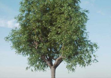 Single tree model-Fstorm | Archvizscenes