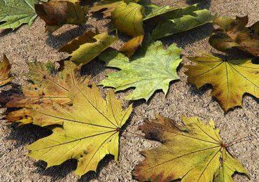 Leaves Pack | Merêces Arch-Viz – 3D Visualization Studio
