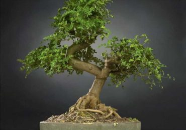 Bonsai Tree 23 Free VR / AR | Mark Florquin