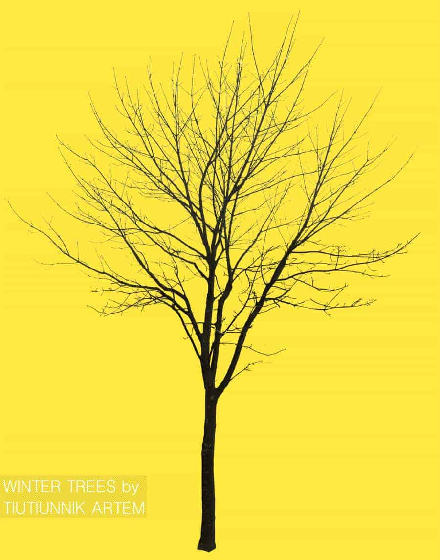 Free-cut-out-winter-trees