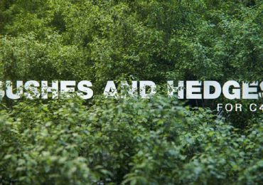 Bushes and Hedges for C4D | Darstellungsart