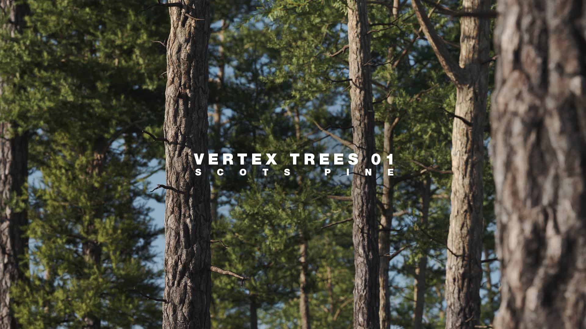 Vertex Trees – Scots Pines Bundle | DARSTELLUNGSART