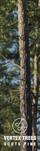 Vertex Trees – Scots Pines Bundle 160×600 | DARSTELLUNGSART
