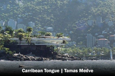 Carribean-Tongue-Tamas Medve