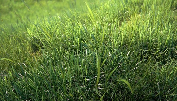 Tutorial-photorealistic-grass