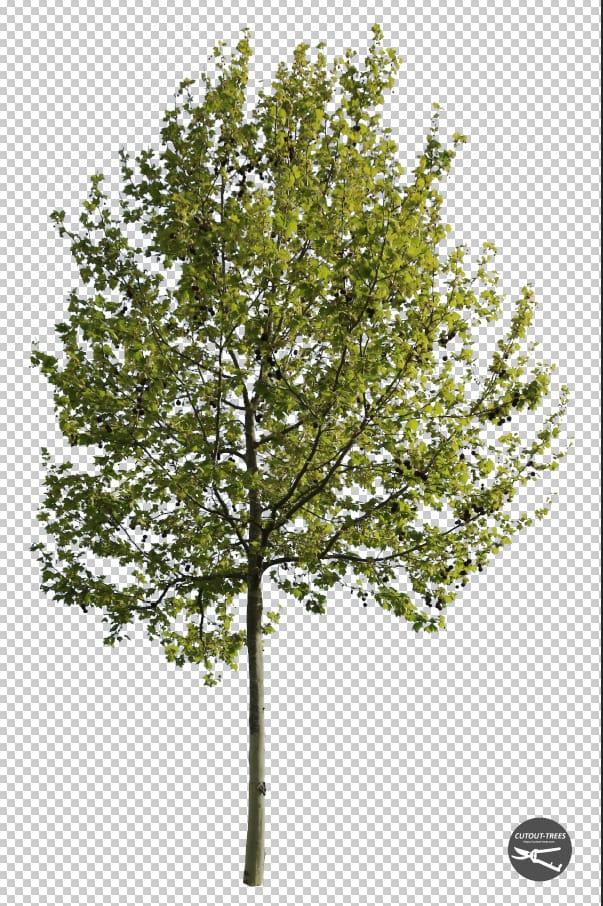 free cutout tree cutout trees com