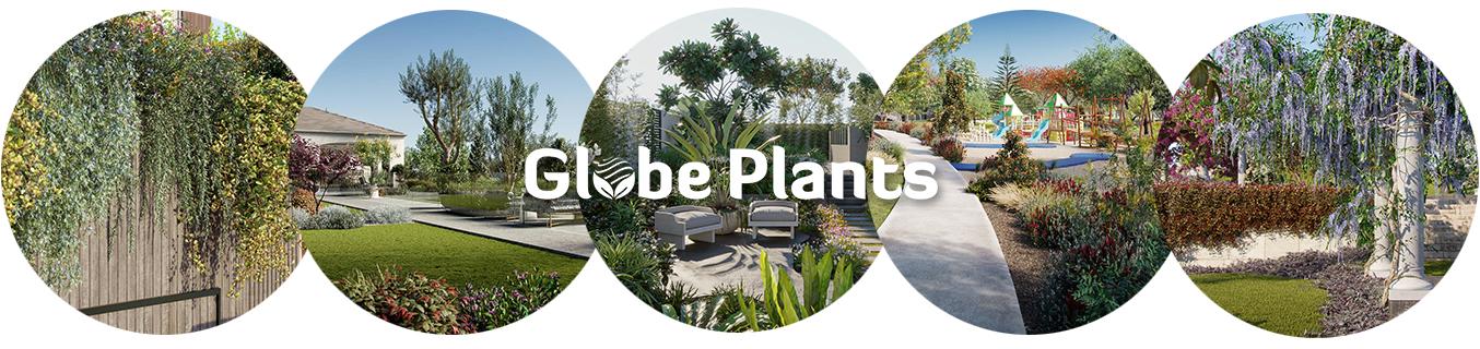 Globe Plants Banner 1500×300