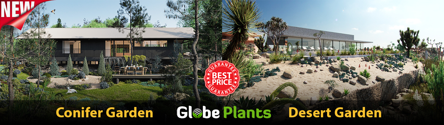Globe Plants Bundle 10&11